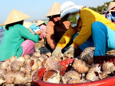 Top 5 chợ mua hải sản ngon, bổ, rẻ tại Đà Nẵng