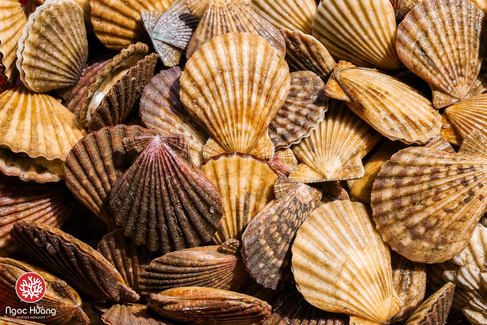 Thực đơn của nhà hàng Ngọc Hương đa dạng món ăn về sò
